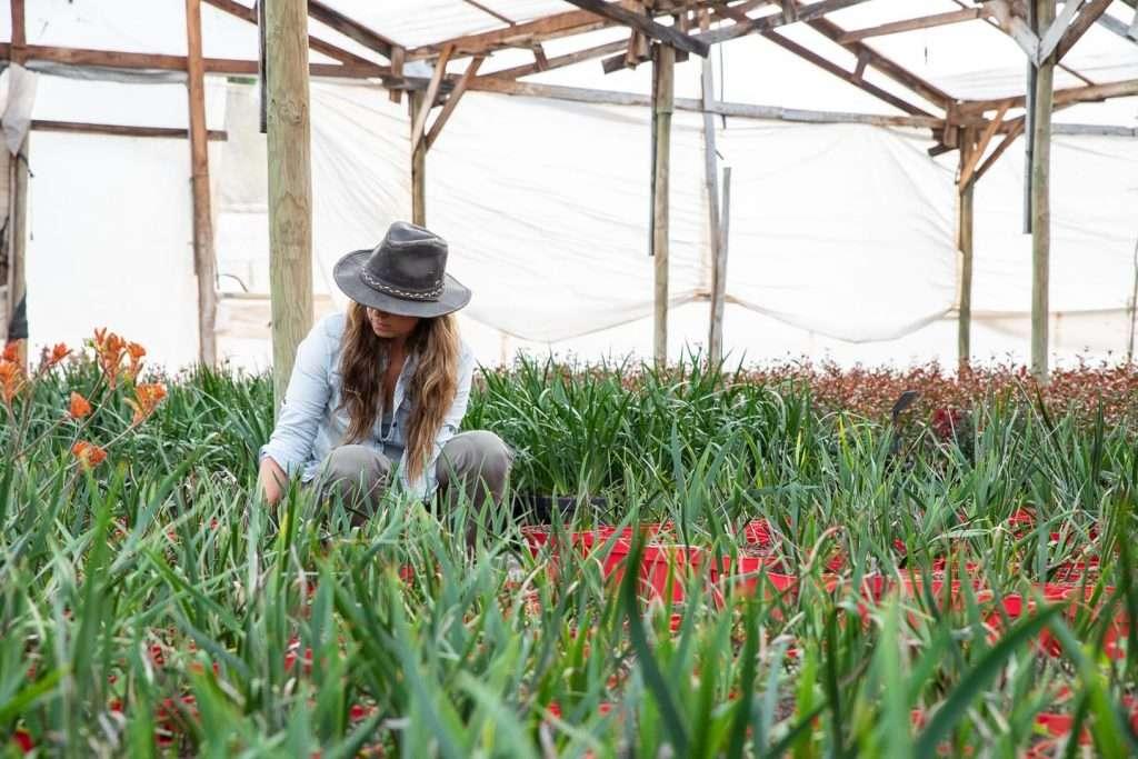 Catalina Barros trabajando con plantas en invernadero